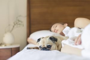 Wash bedding more often if pets sleep on your bed